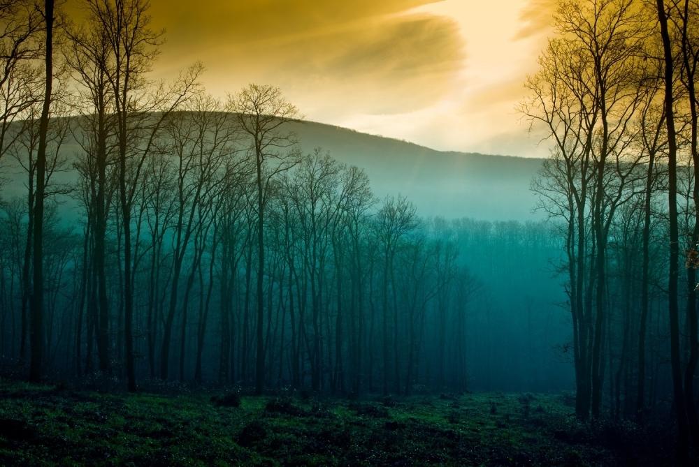 Planina Šuma Jesen