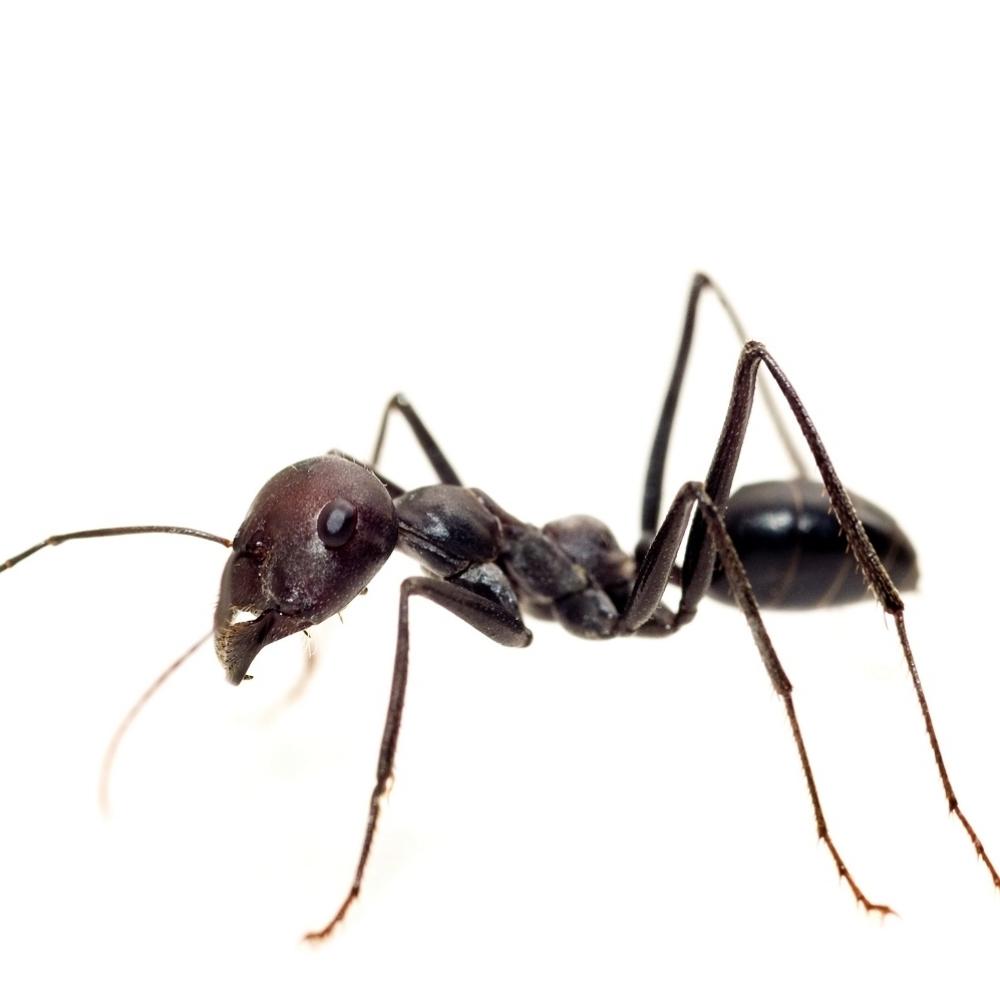 Resite-se-dosadnih-mrava-u-kuci-pomocu-OVE-JEFTINE-NAMIRNICE