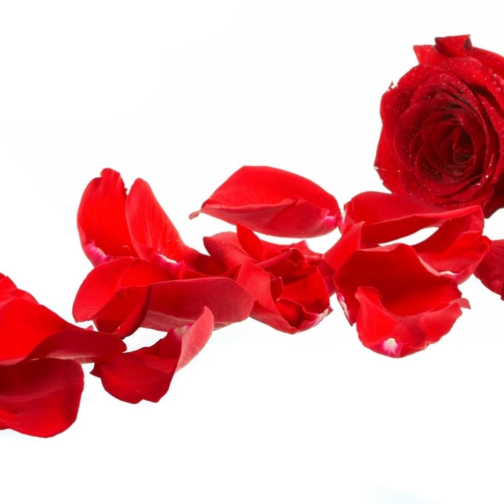 Ako-vam-dragi-pokloni-ovoliko-ruza-ostacete-zauvek-zajedno