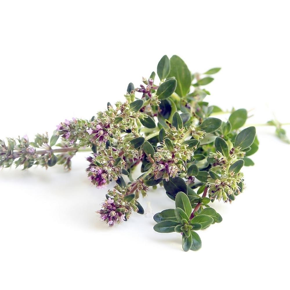 Ova-cudotvorna-biljka-UNISTAVA-polne-bolesti-gljivice-i-viruse