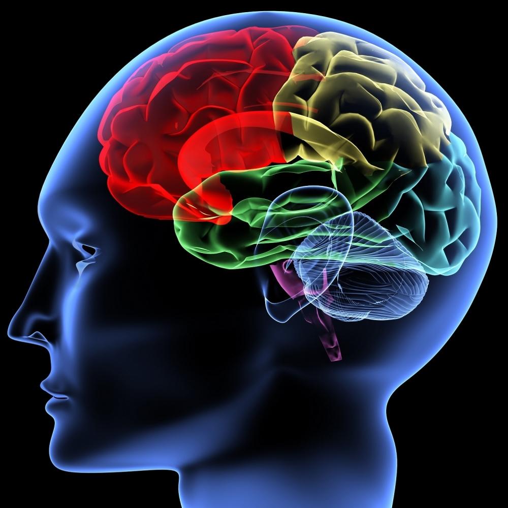 Hrana-koju-svakodnevno-konzumirate-unistava-vas-mozak