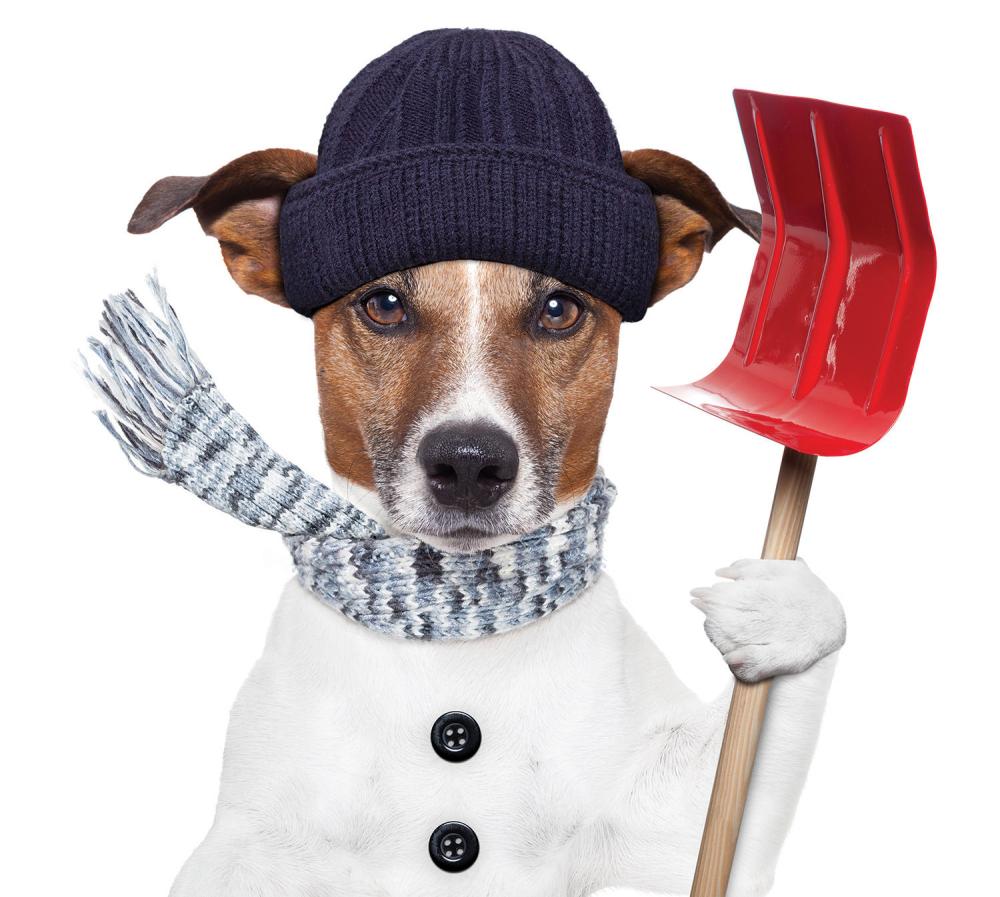 Ne treba dozvoljavati psu da jede sneg ako nije čist