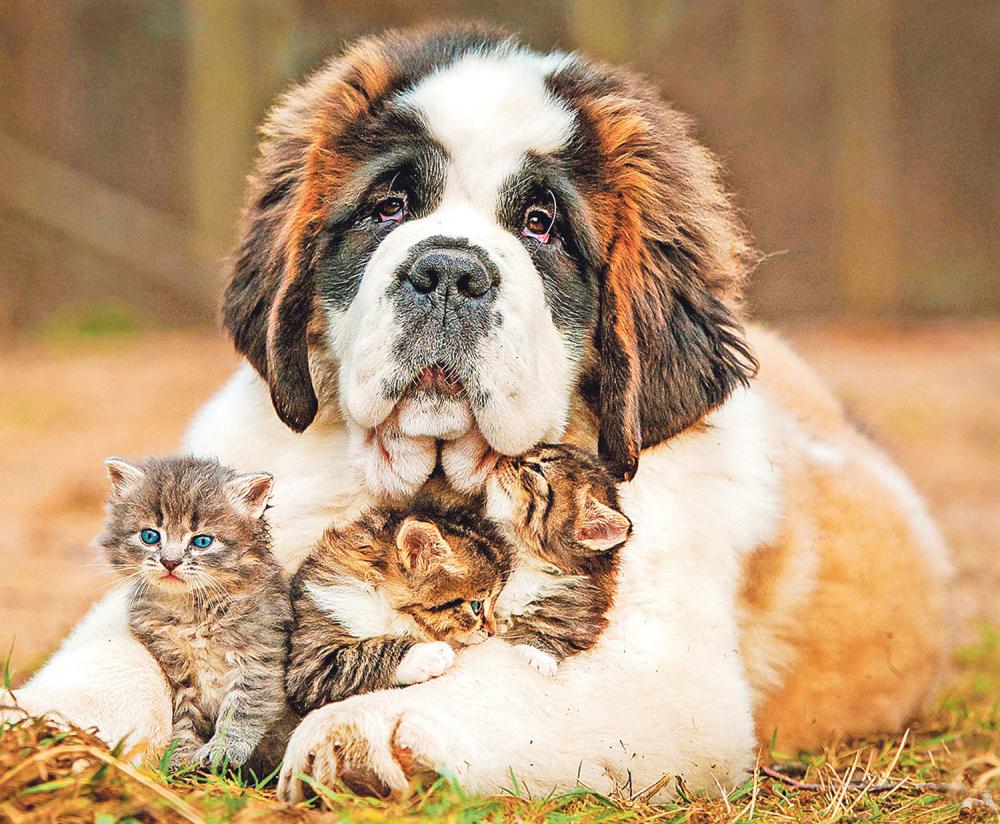 Pas sa mačkama