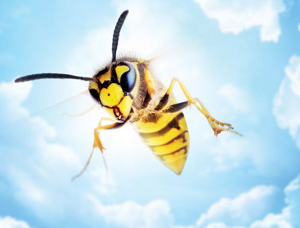 Pčele ubadaju samo kada su uznemirene