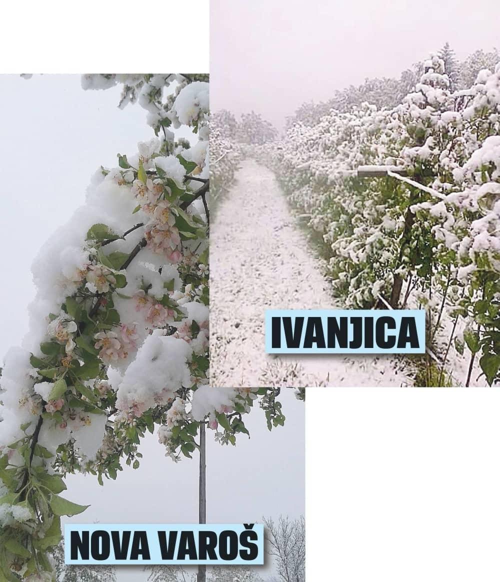 Sneg zavio u crno malinare