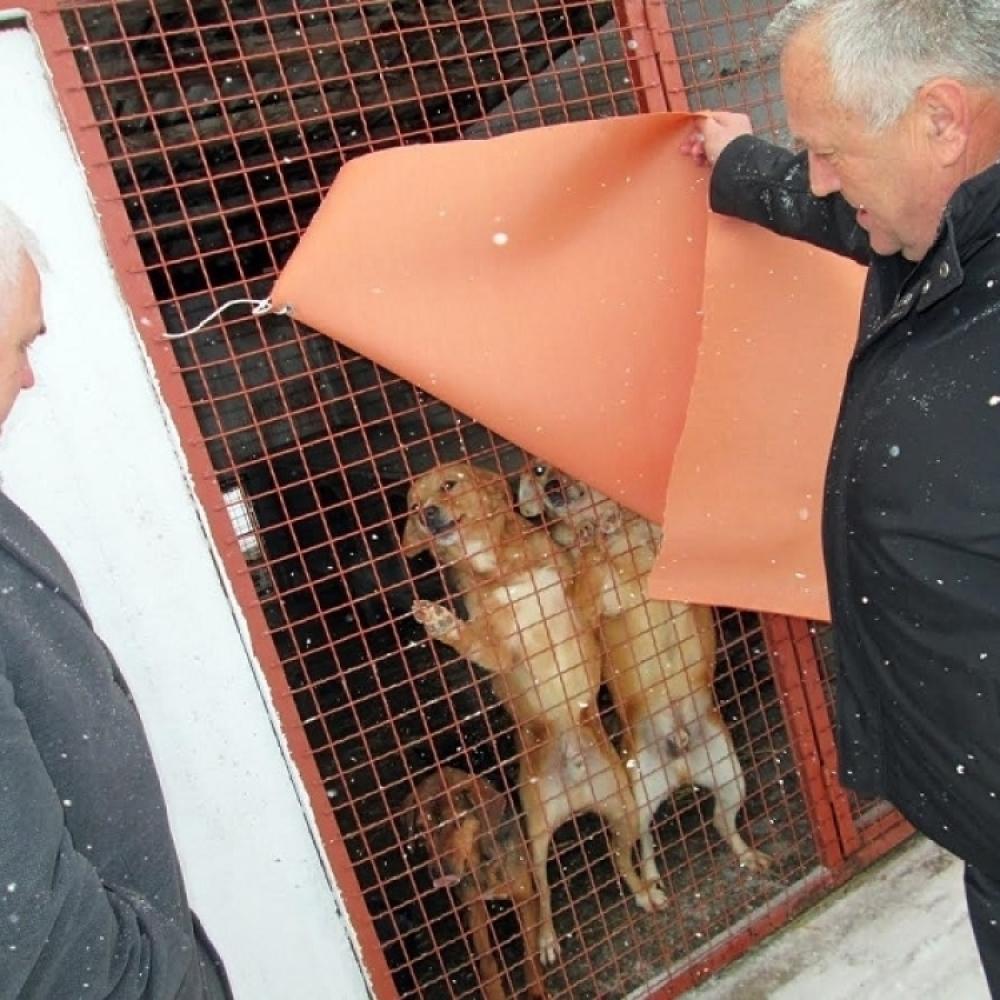 Šta ovo rade jadnim životinjama!? (FOTO) - alo rs