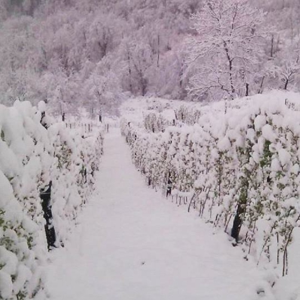 Sneg-unistio-maline-FOTO