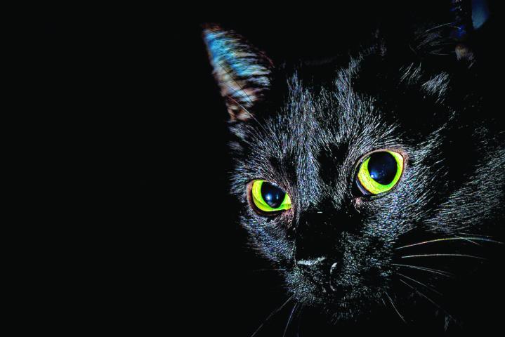 Umetanje crnih maca