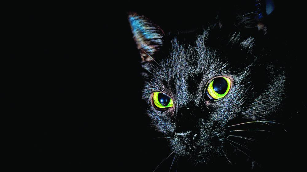 crne pantere maca slike xxx downlode video