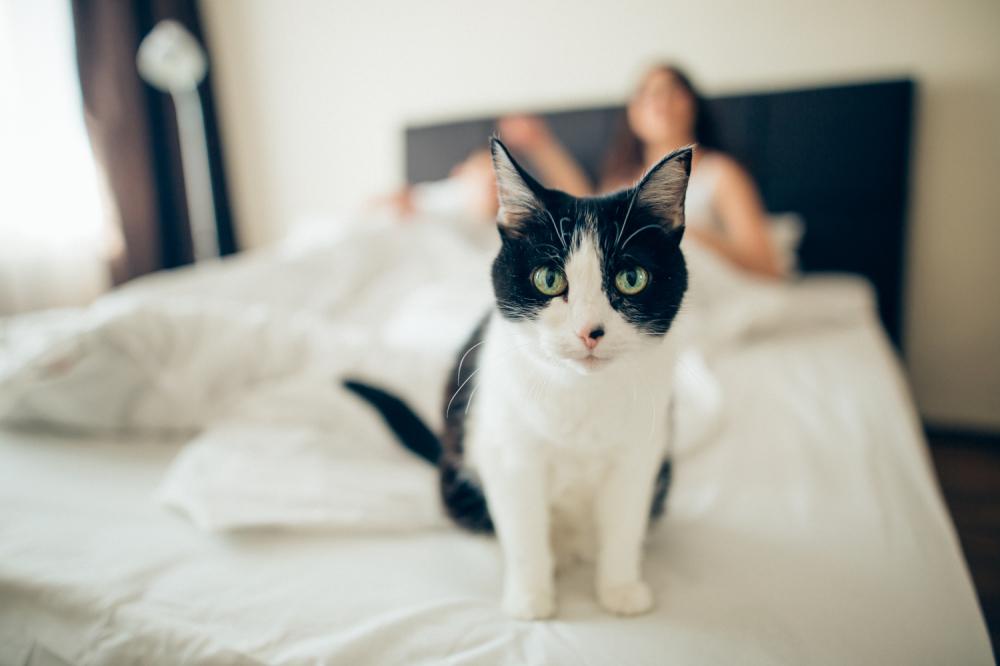 galerije zrelih maca muški seks masaža video