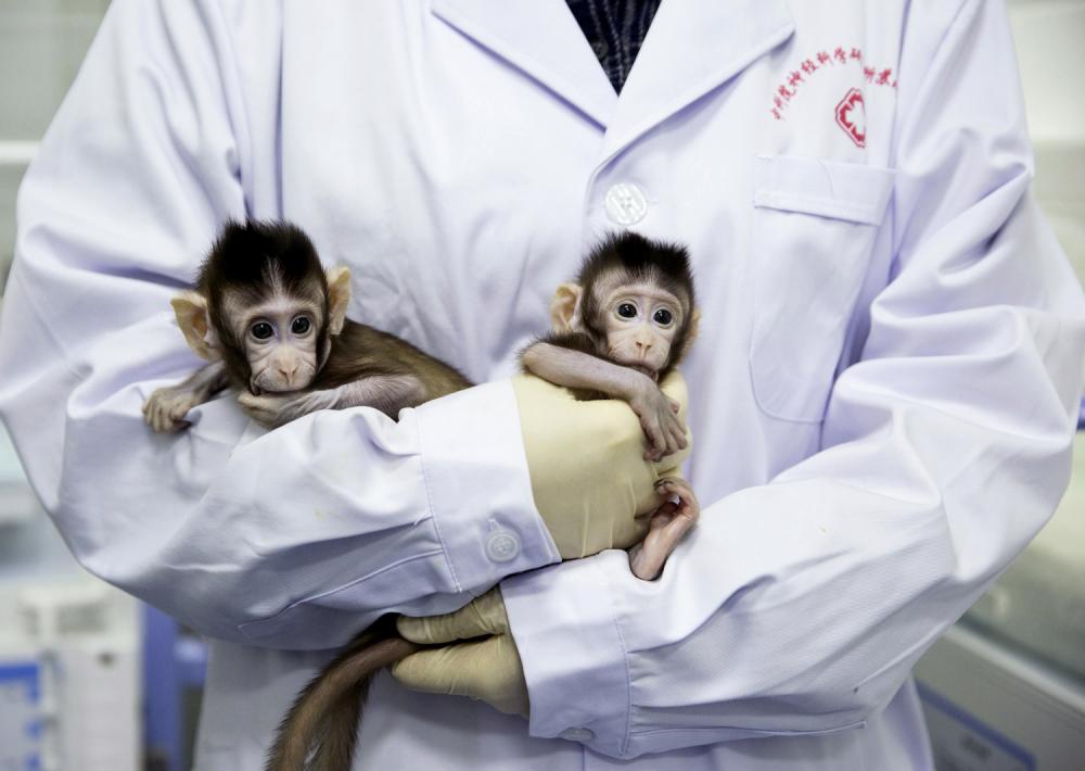 Žong Žong i Hua Hua, klonirani majmuni, beba majmun
