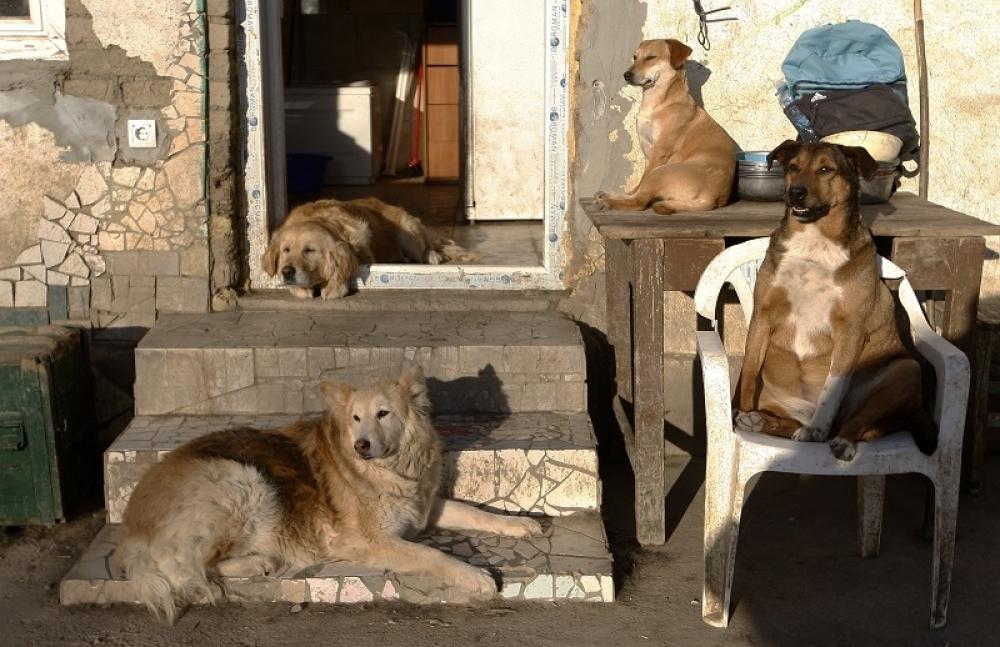 Psi iz azila
