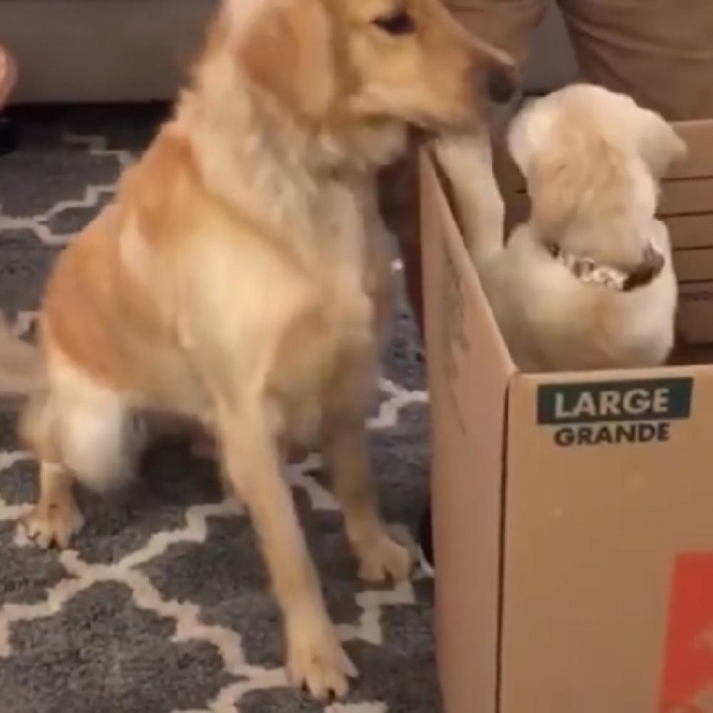 Stariji-pas-dobio-malog-drugara-pa-uradio-nesto-predivno-VIDEO