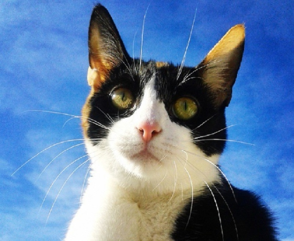 crvena glava maca porno analni seks nježan