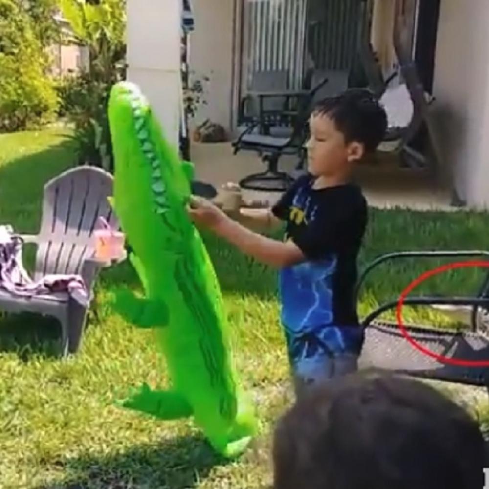 Decak-se-igrao-u-dvoristu-a-onda-se-iza-njega-pojavila-OPASNA-ZIVOTINJA