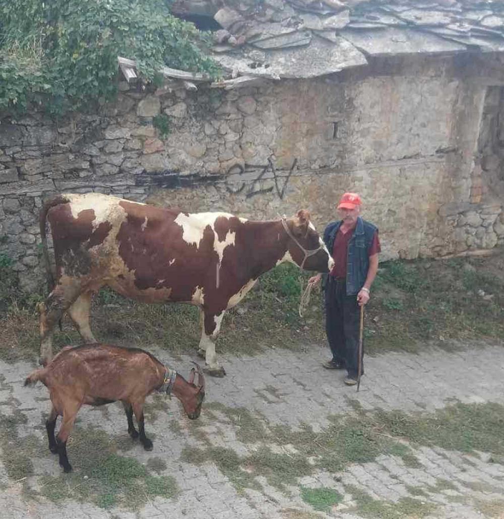 Kravu je dobila i porodica Matić
