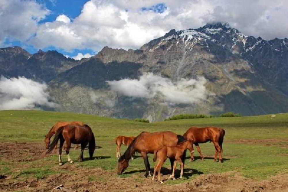kavkaz, hrana, dugovečnost, priroda